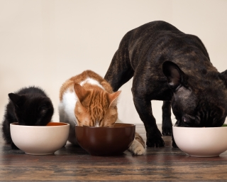 A kitten, a cat, and a dog eating from their food bowls.
