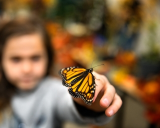 A monarch butterfly perches on a little girl's fingers.