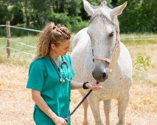 A vet wearing green scrubs and a stethoscope works with a white horse in a field.