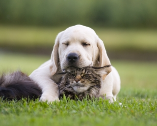 A dog and a cat snuggle together in the grass.