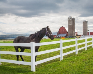 A horse standing over a white fence in field with a barn and silos on the background.