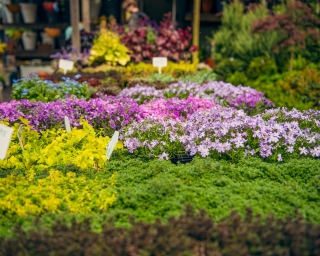 An outdoor plant market in Brooklyn with green, purple, and yellow flowers.