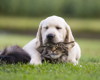 A puppy and cat snuggling together in a field.