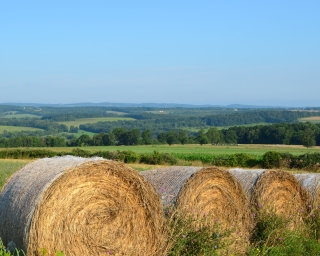 Bales of hay in the foreground with New York State farmland behind.