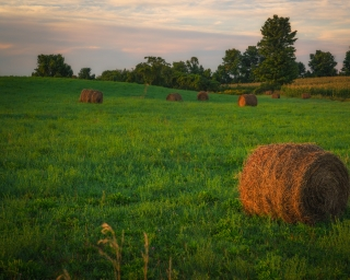 Hay bales in a green field with a sunset and trees in the background.