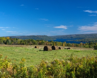 Farmland in the Finger Lakes region on a sunny day.