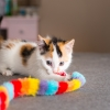 A black, white, and brown kitten plays with a rainbow-colored toy.
