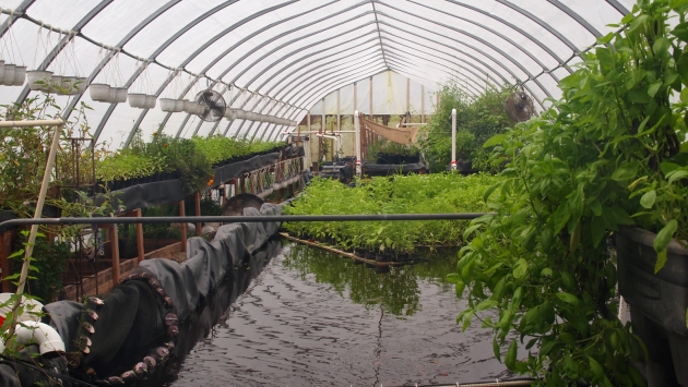 An aquaponics project in Buffalo, New York.