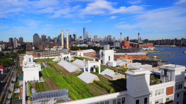 A rooftop farm overlooking the Manhattan skyline in Brooklyn, New York.